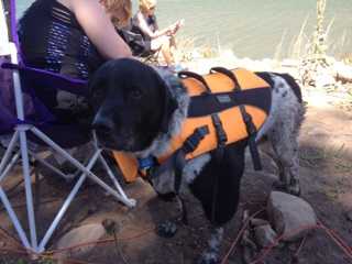 Oreo wonders why she needs a life jacket